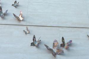Butterflies42916-1