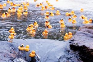 Duck_hero