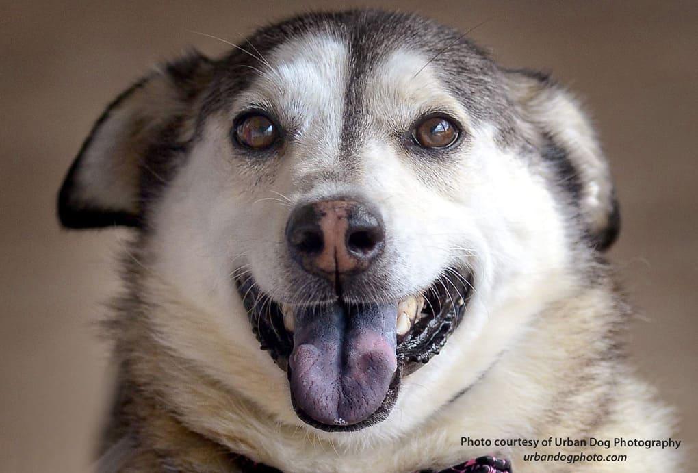 Bailey_Canine-52716-1