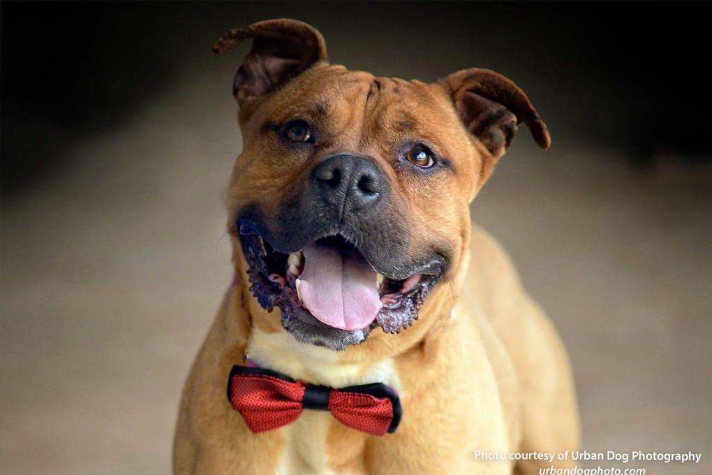 CanineCorrespondence_52016-1