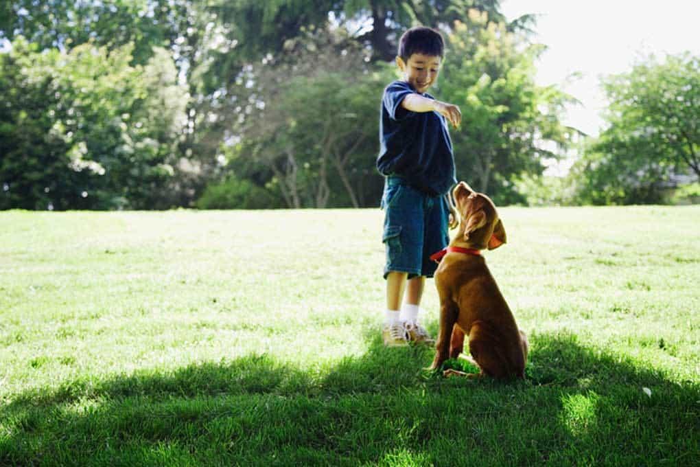 Cuando las personas van a faltar, estos de búsqueda y rescate, perros de encontrar - Greenville Diario 7
