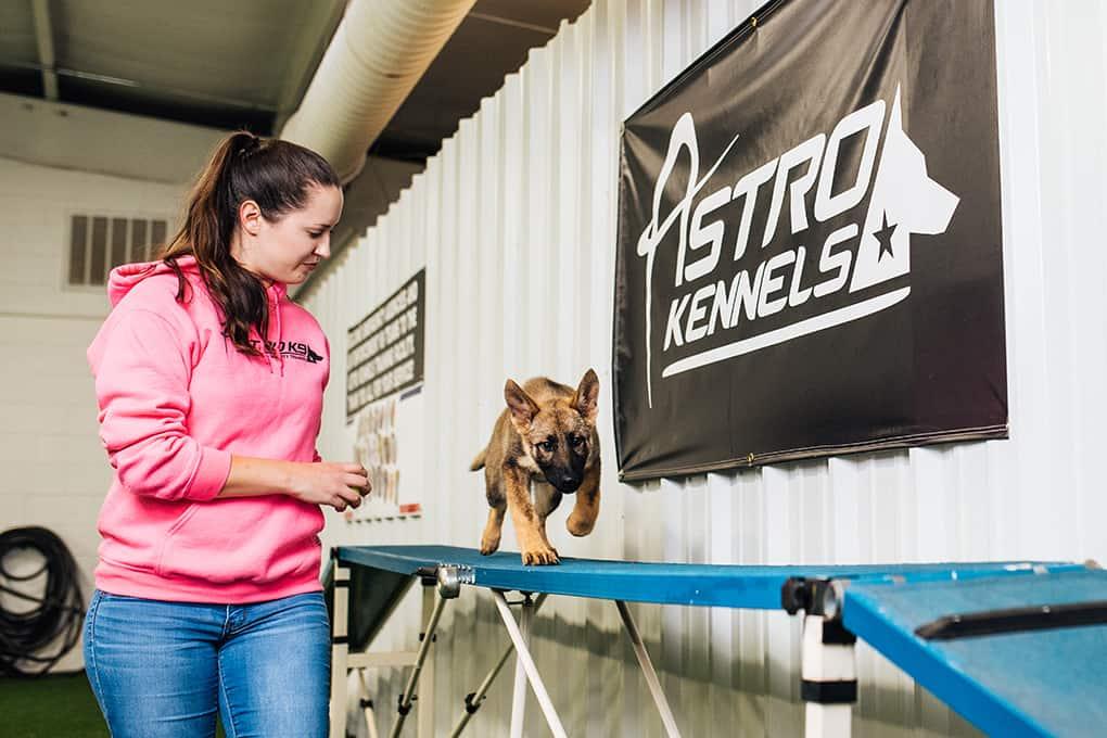 Dog Training Schools In Greenville Sc