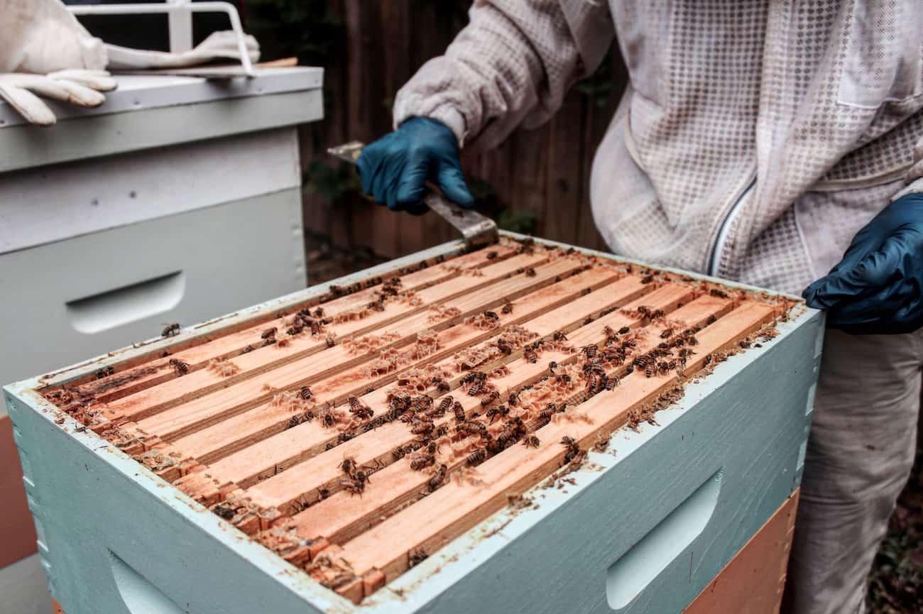 the beekeeper next door urban beekeeping blooms in greenville