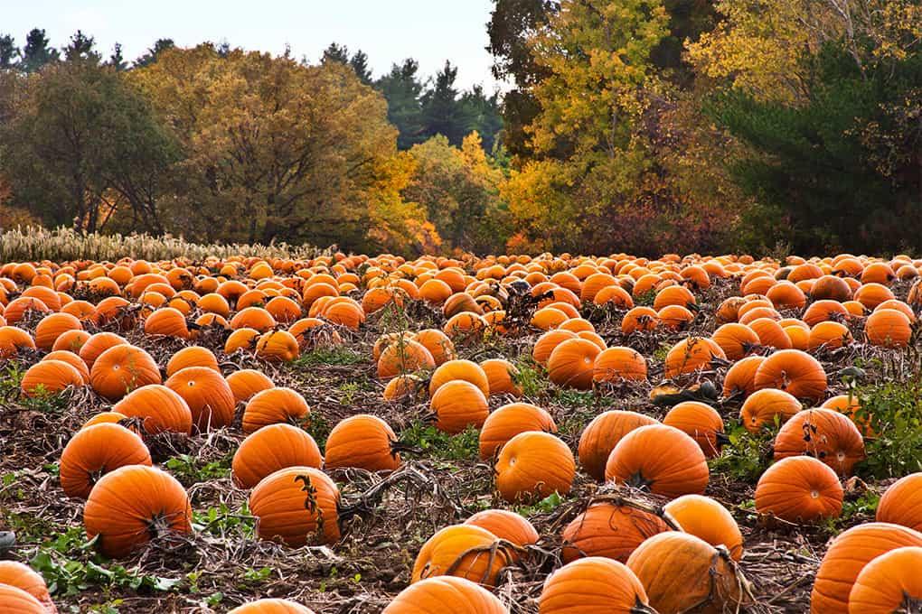 Pumpkintown Festival 2020 Calendar Spotlights: Pumpkintown Pumpkin Festival, Wiley Cash, and
