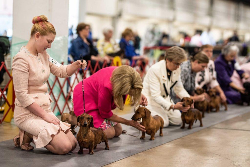 Carolina Foothills Dog Show