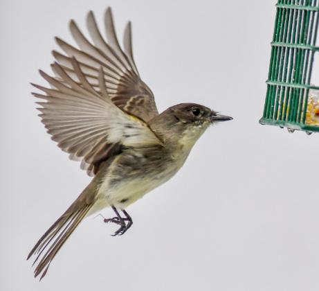 Bird Reader's Lens