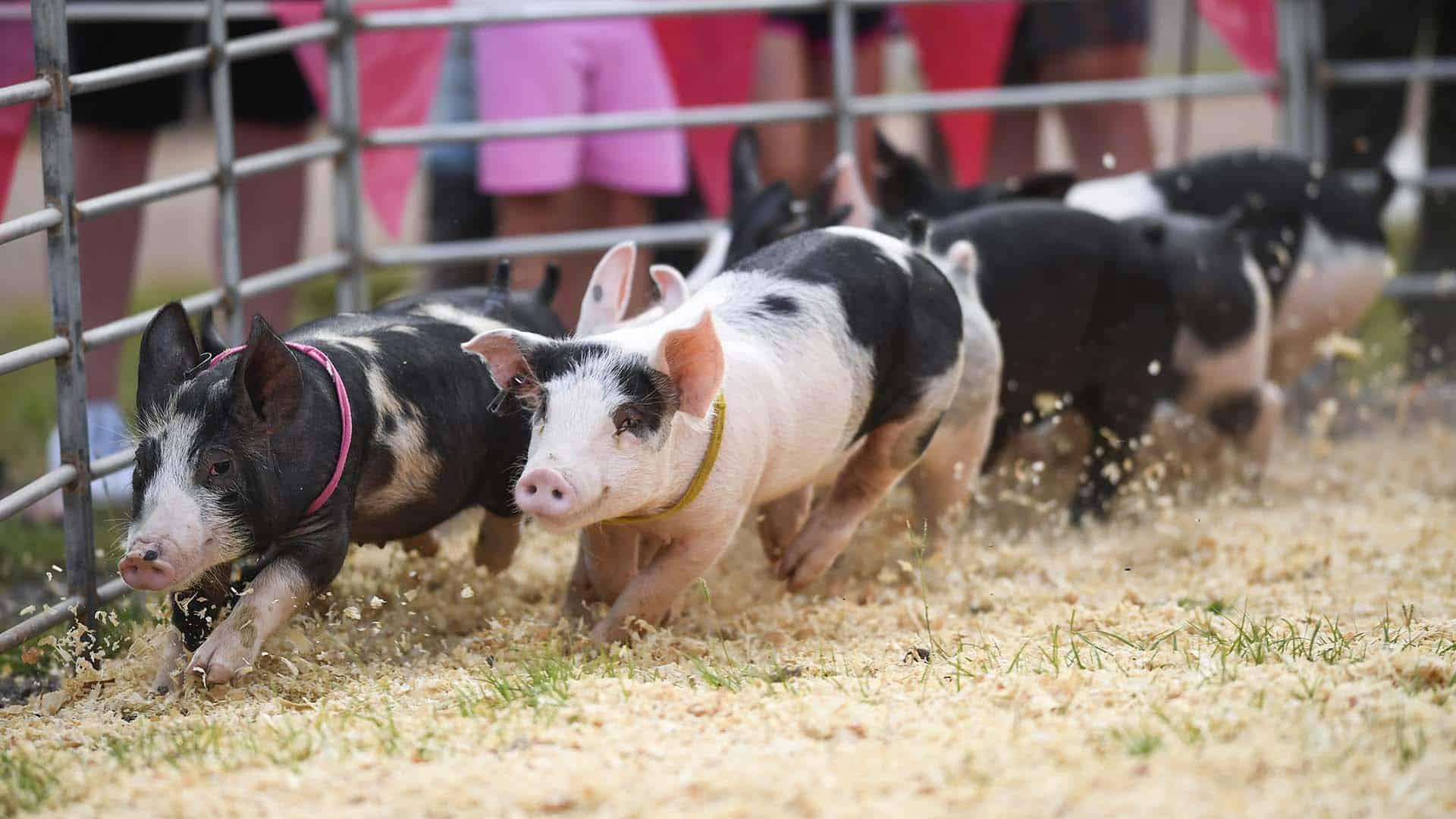 Upper South Carolina State Fair - GREENVILLE JOURNAL