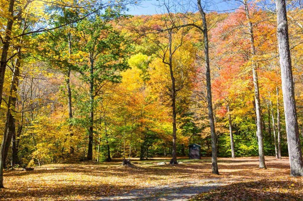 Fall Greenville