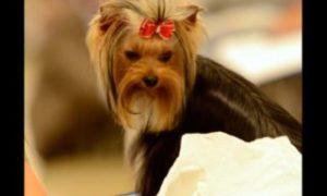 Photos: Carolina Foothills Dog Show Cluster