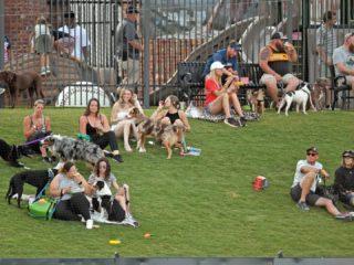 Photos: Greenville Drive fans enjoy recent home games
